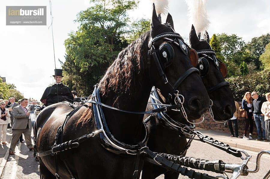 Southwell Minster Wedding Horses