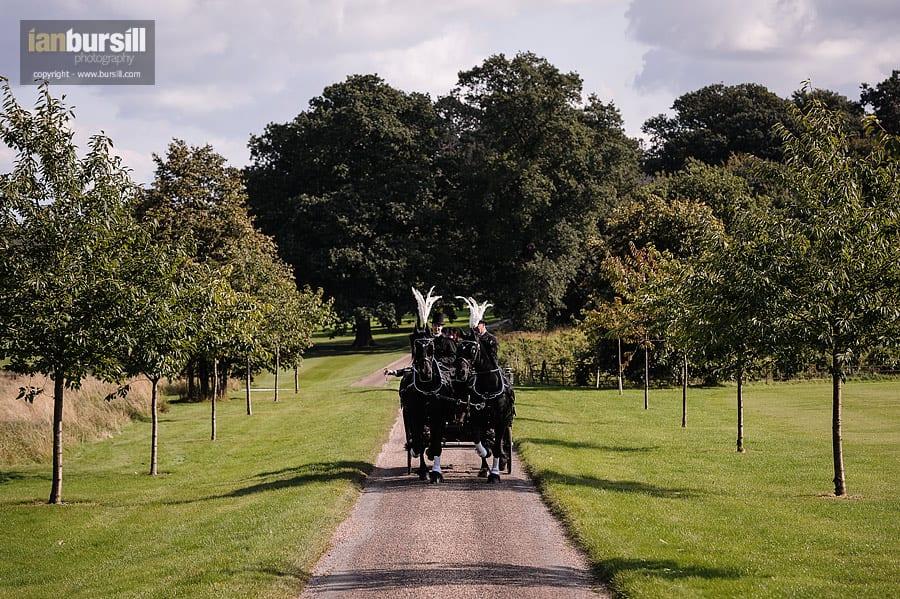 Norwood Park Wedding Horses
